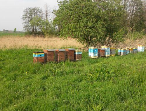 Historia o pszczołach