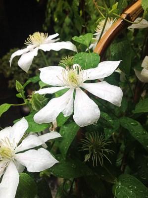 Biało-zielony ogród moich marzeń
