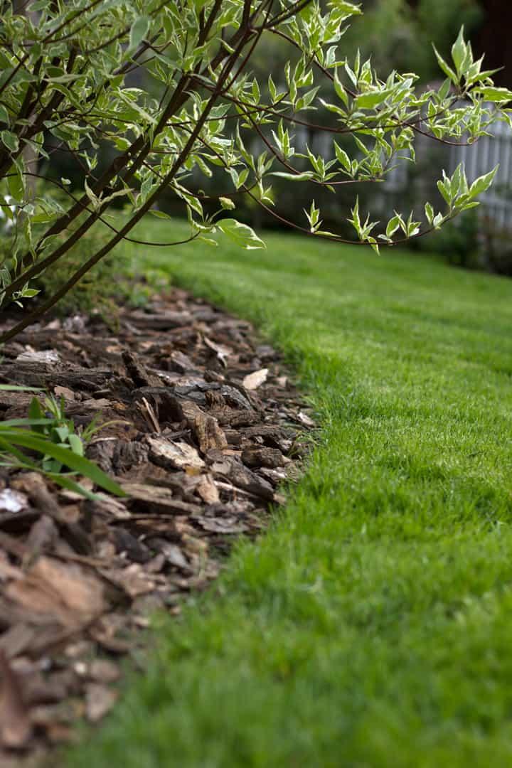 Krawędzie trawnika