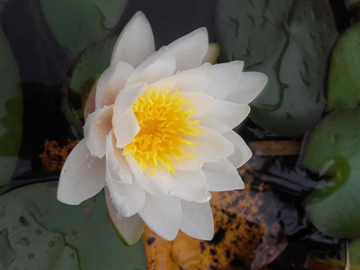Woda w ogrodzie – oczko wodne, fontanna, staw, a może strumień?
