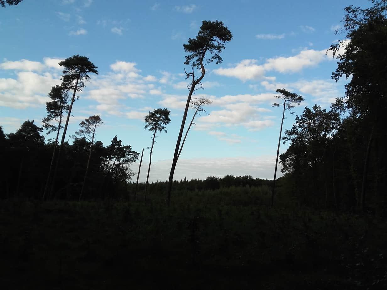 Duże i stare drzewa w ogrodzie