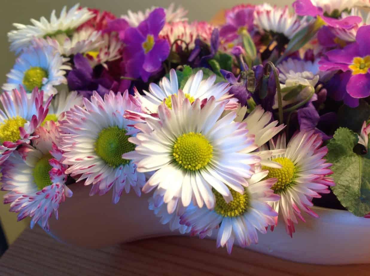 Wiosenna pobódka i sadzenie wysokich róż