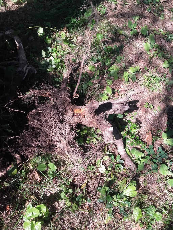 Sprawdzone sposoby na usuwanie korzeni drzew i krzewów