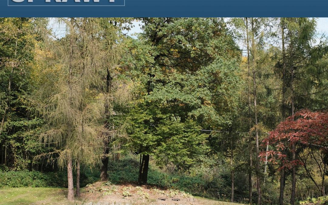 06 – Ogród leśny